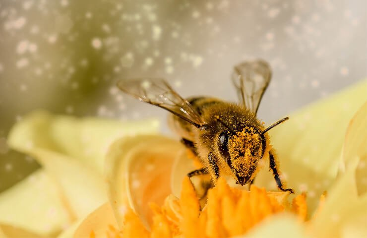 Importance-of-bees-for-the-planet